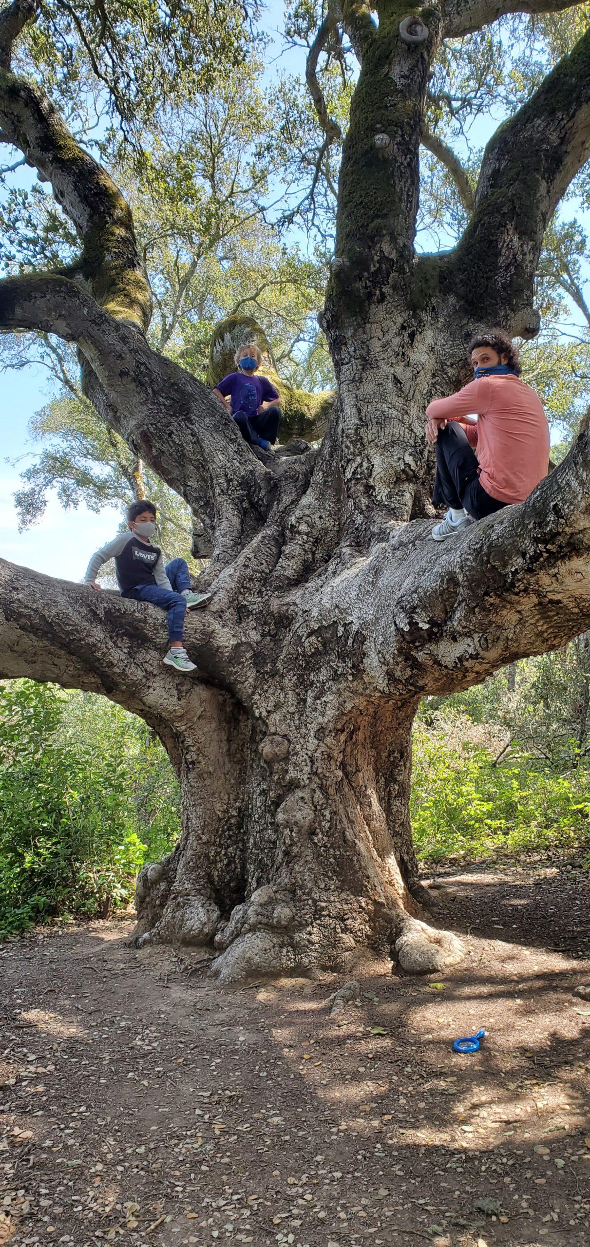 Up A Tree with Shaya